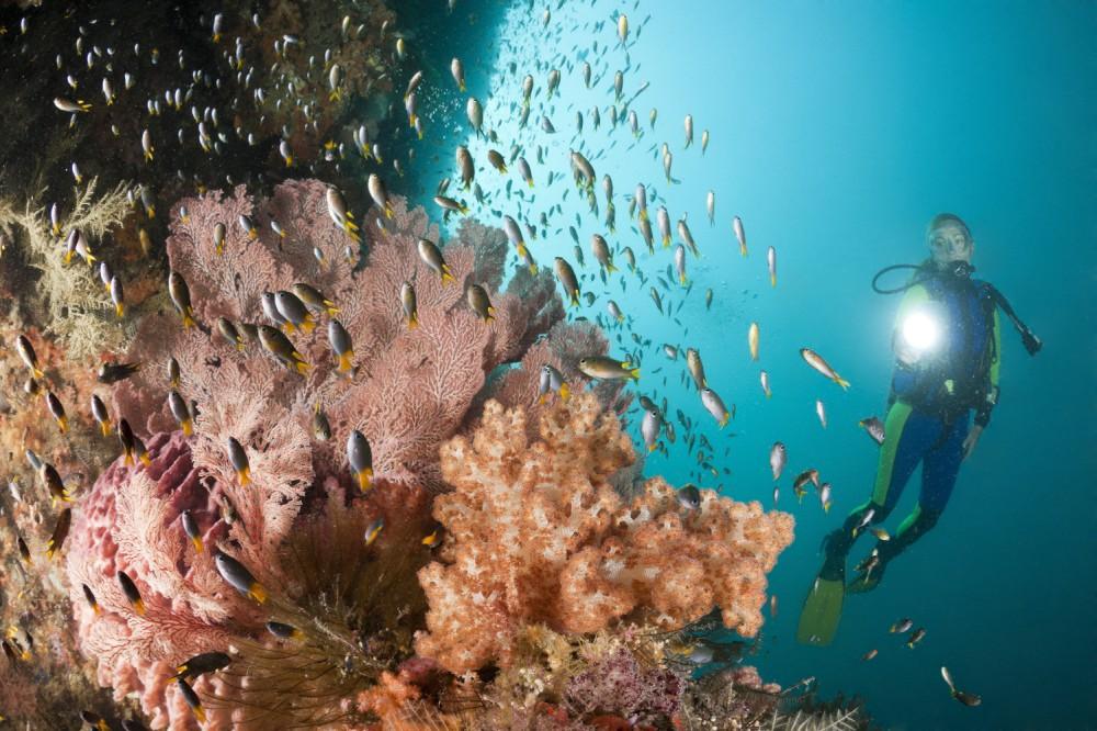 Ini Dia Lokasi Menyelam di Raja Ampat untuk Pemula