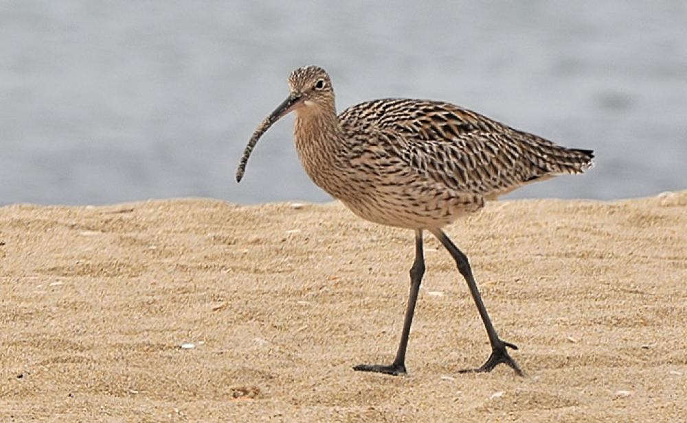 Rare Bird Found In Indonesia