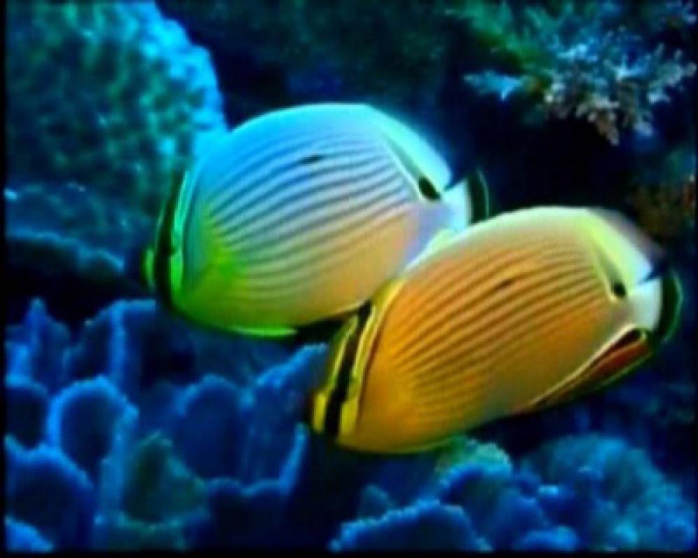 Sail Wakatobi, Rhytm of Underwater Beauty