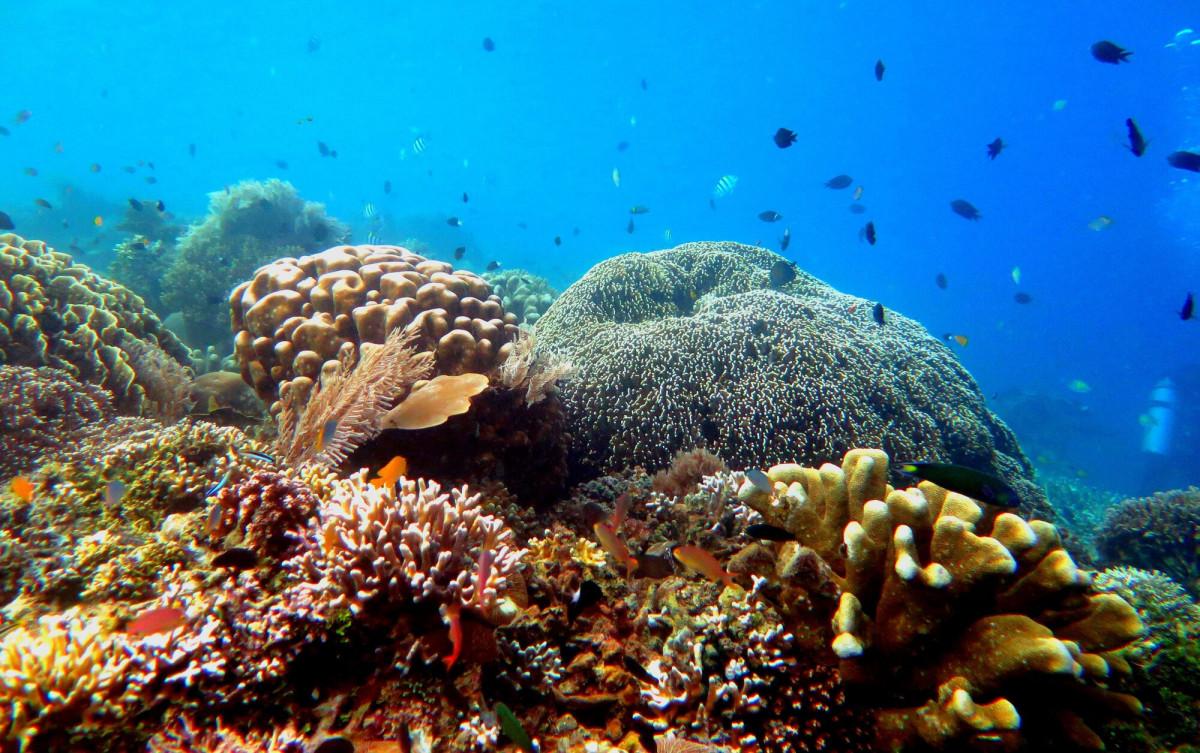 Capai Tujuan SDG dan Visi Indonesia 2030 Melalui Kawasan Konservasi Baru di Maluku