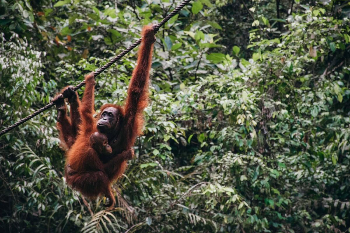 Menyambangi Keanekaragaman Hayati Tanpa Batas di Garis Terluar Indonesia