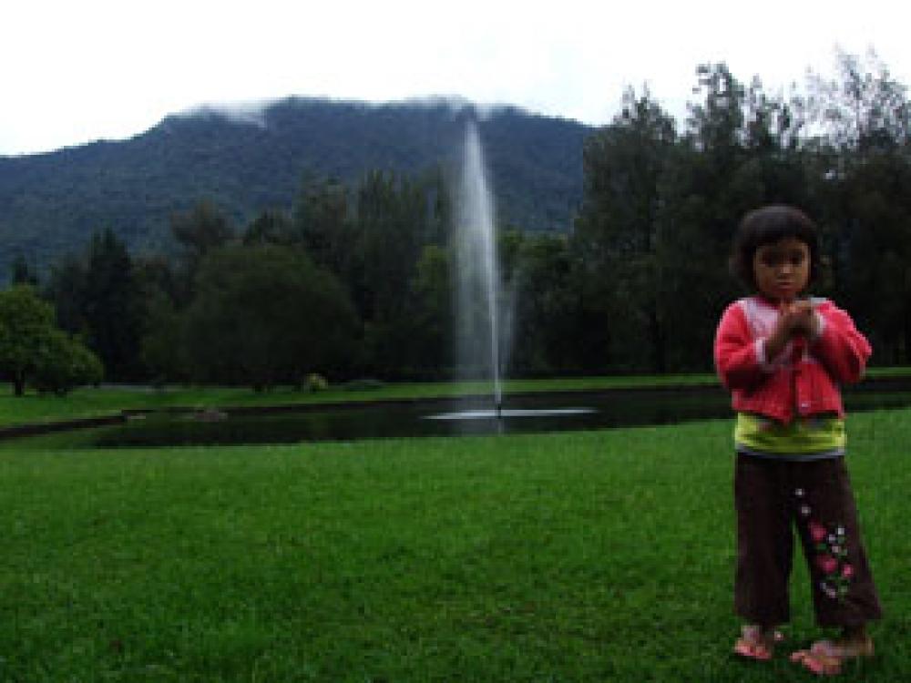 See the World in Cibodas Botanical Garden