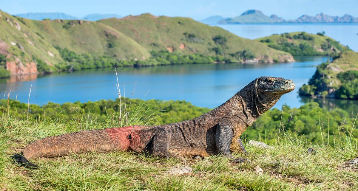 Sosok di Balik Terpilihnya Pulau Komodo Sebagai Bagian dari 7 Keajaiban Dunia