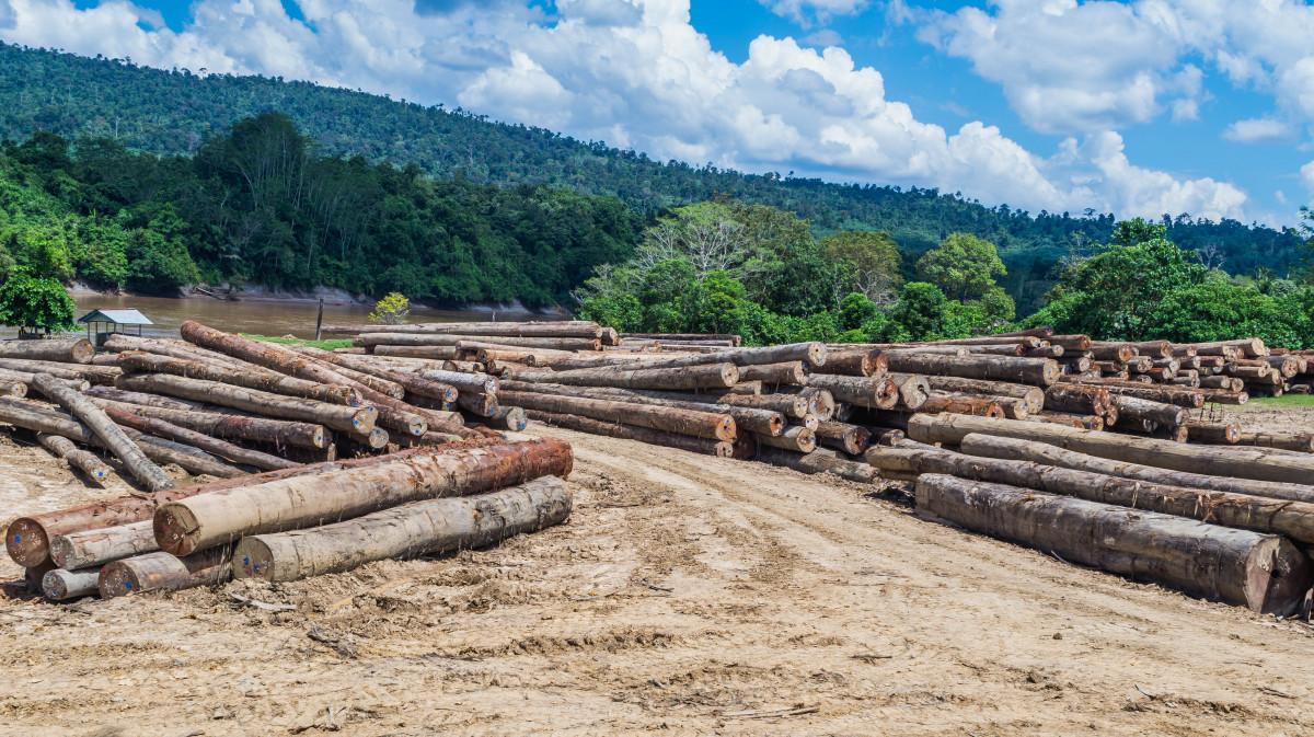 Deforestasi dan Sampah Plastik yang Dapat Mengganggu Ekosistem Kehidupan Hewan