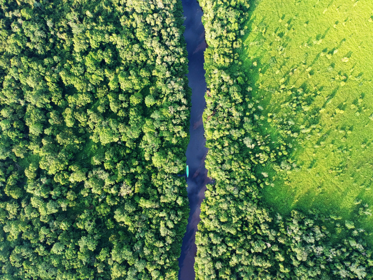 Meski Kerja Sama REDD+ dengan Norwegia Berakhir, Indonesia Tetap Konsisten Lindungi Hutan