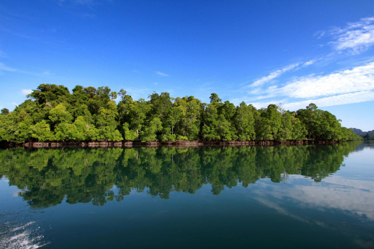 Pemerintah Targetkan Rehabilitasi Mangrove Seluas 630 Ribu Hektare Hingga Tahun 2024