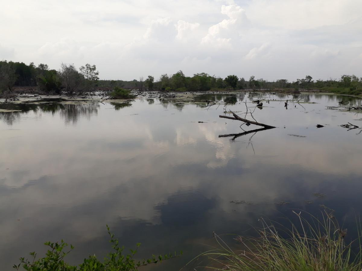 Silvofishery, Alternatif Melestarikan Hutan Bakau dengan Budidaya Ikan