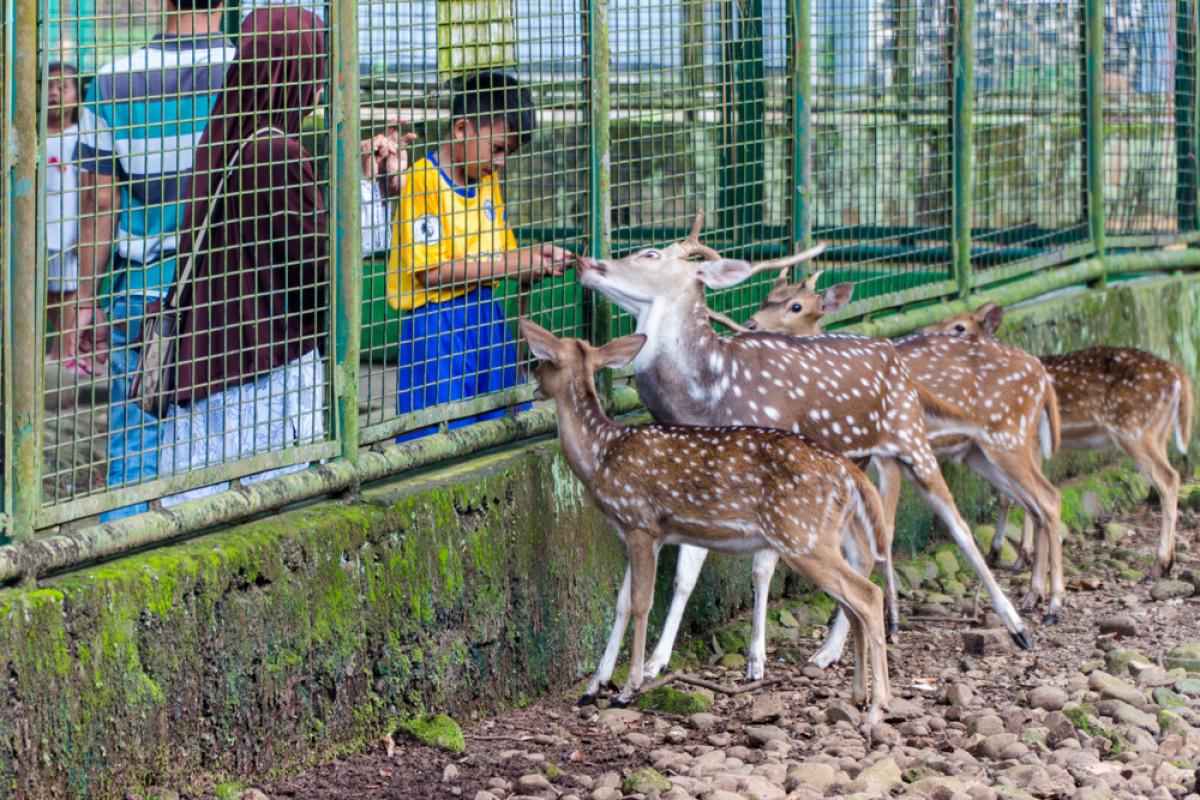 Taman Margasatwa Ragunan, Lokasi Wisata Favorit Warga Jakarta Saat Lebaran