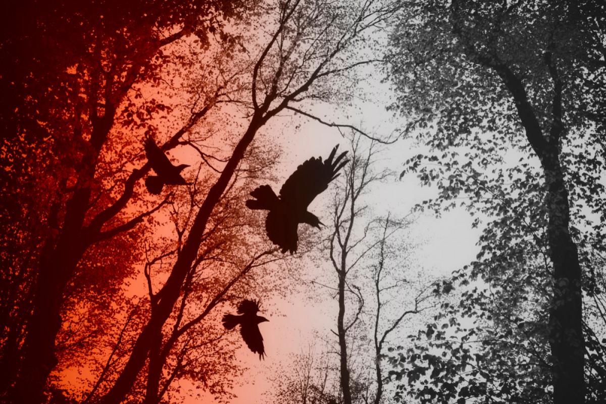 Mitos Suara Burung Penanda Bencana dan Kematian