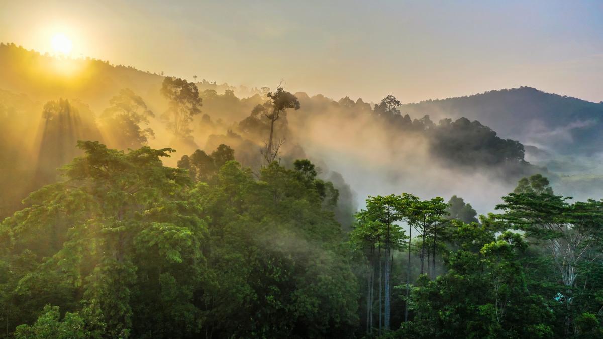 Cerita Seorang Jenderal yang Risau dengan Lingkungan dan Kondisi Hutan