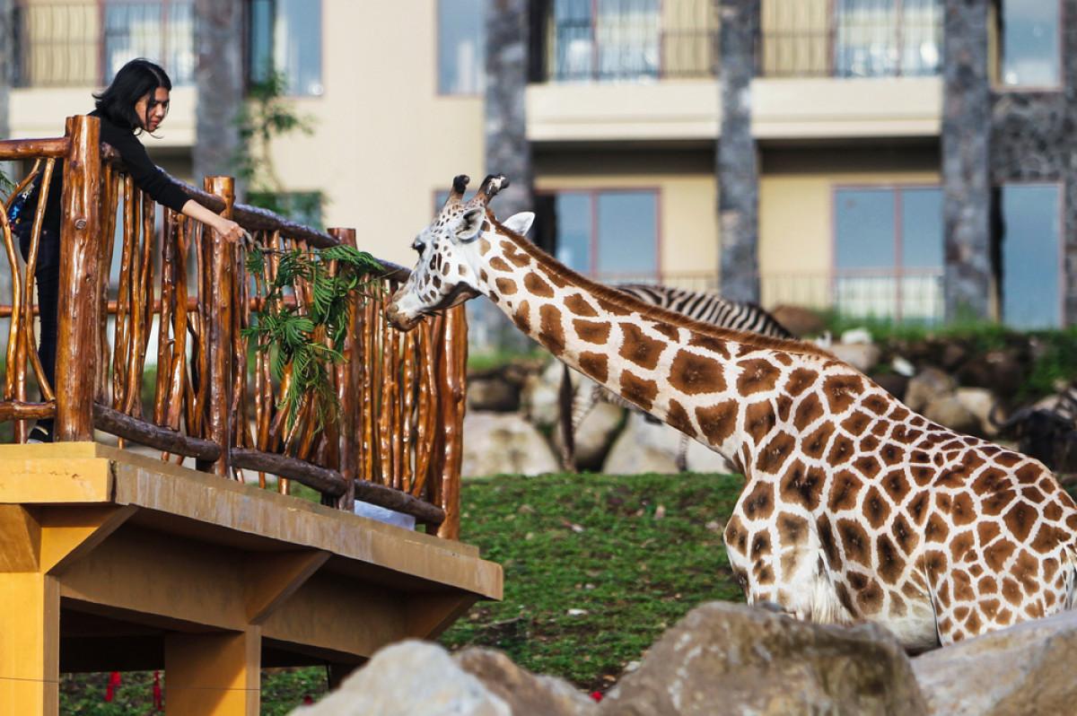 Wisata Edukasi Sambil Menyapa Satwa di Taman Safari Prigen