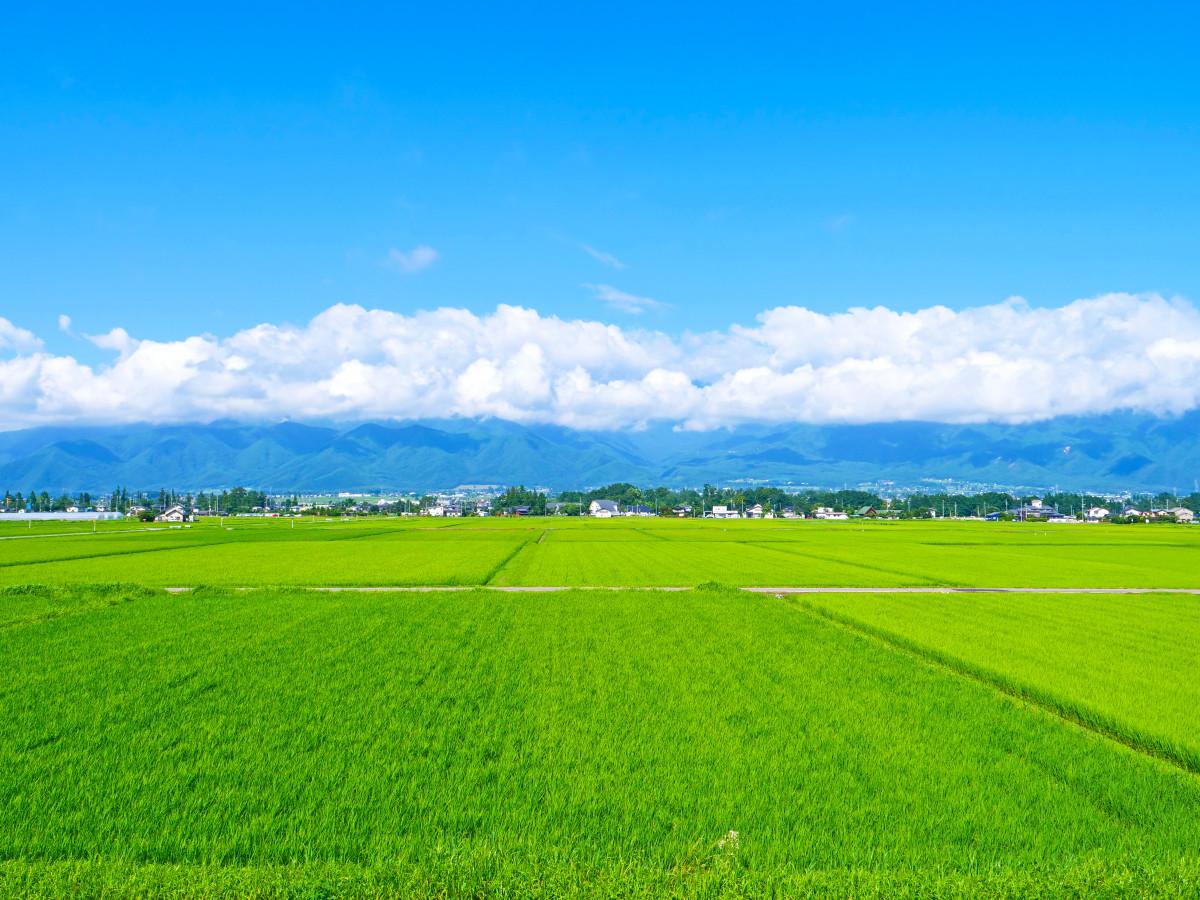 Produksi Jutaan Ton, Inilah 10 Provinsi Penghasil Beras Terbesar di Indonesia