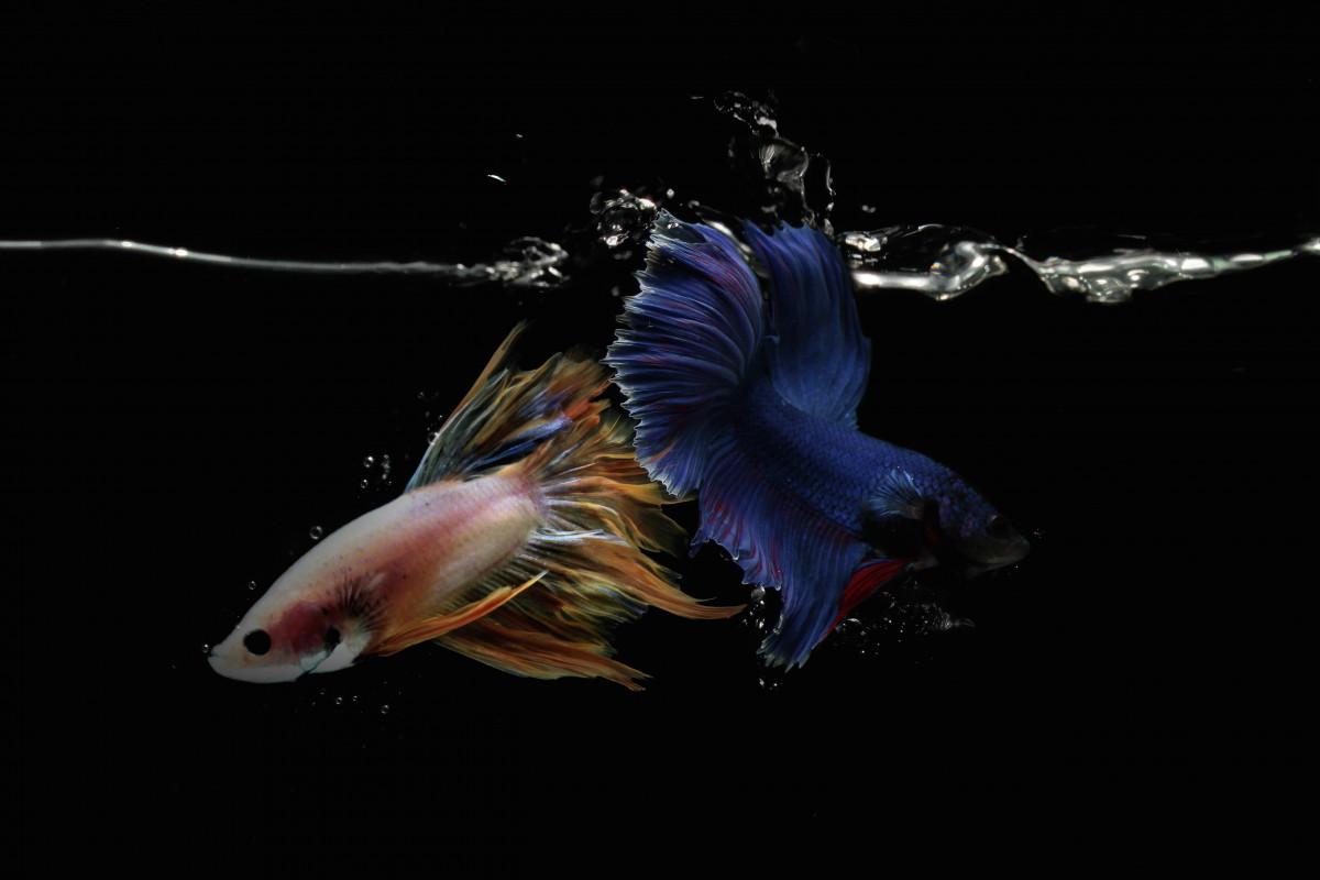 Tak Hanya Primadona Ekspor Hasil Perairan, Ikan Hias Jadi Salah Satu Penopang Perekonomian