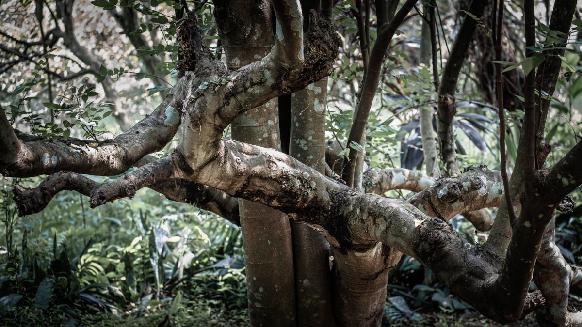 Tahura Pancoran Mas, Saksi Bisu Depok Jadi Hutan Kota Zaman Hindia Belanda
