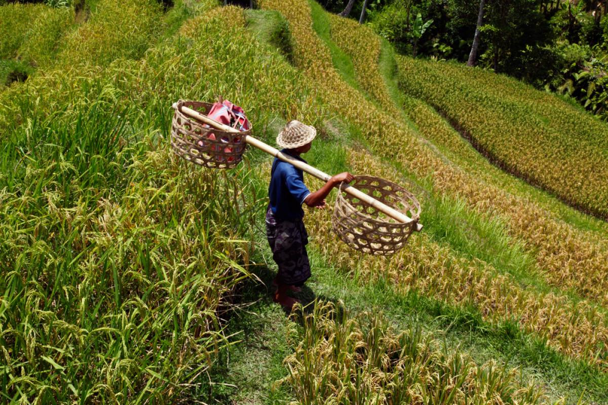 Kasim Arifin, Jalani KKN 15 Tahun Demi Kembangkan Pertanian di Maluku