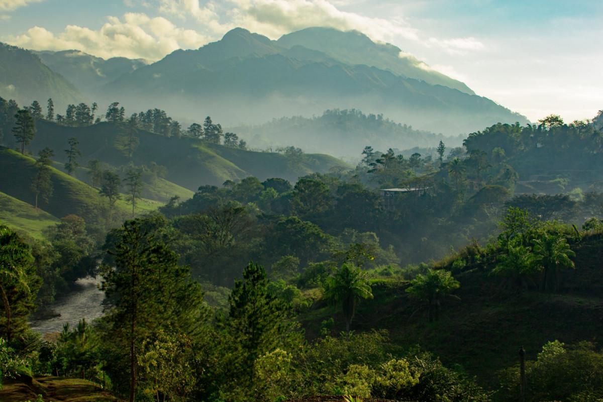 Kemerdekaan Indonesia dan Upaya Memerdekakan Hutan