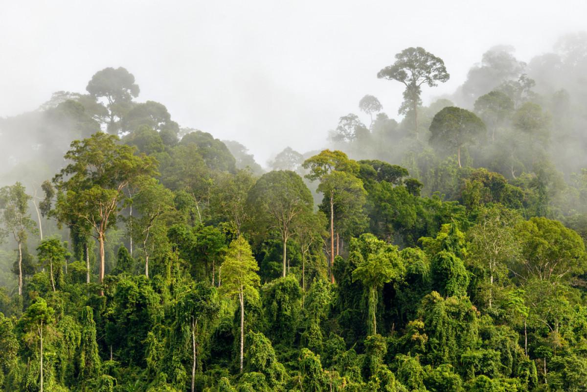 Orang Boentoet, Legenda Manusia Berekor di Pedalaman Borneo
