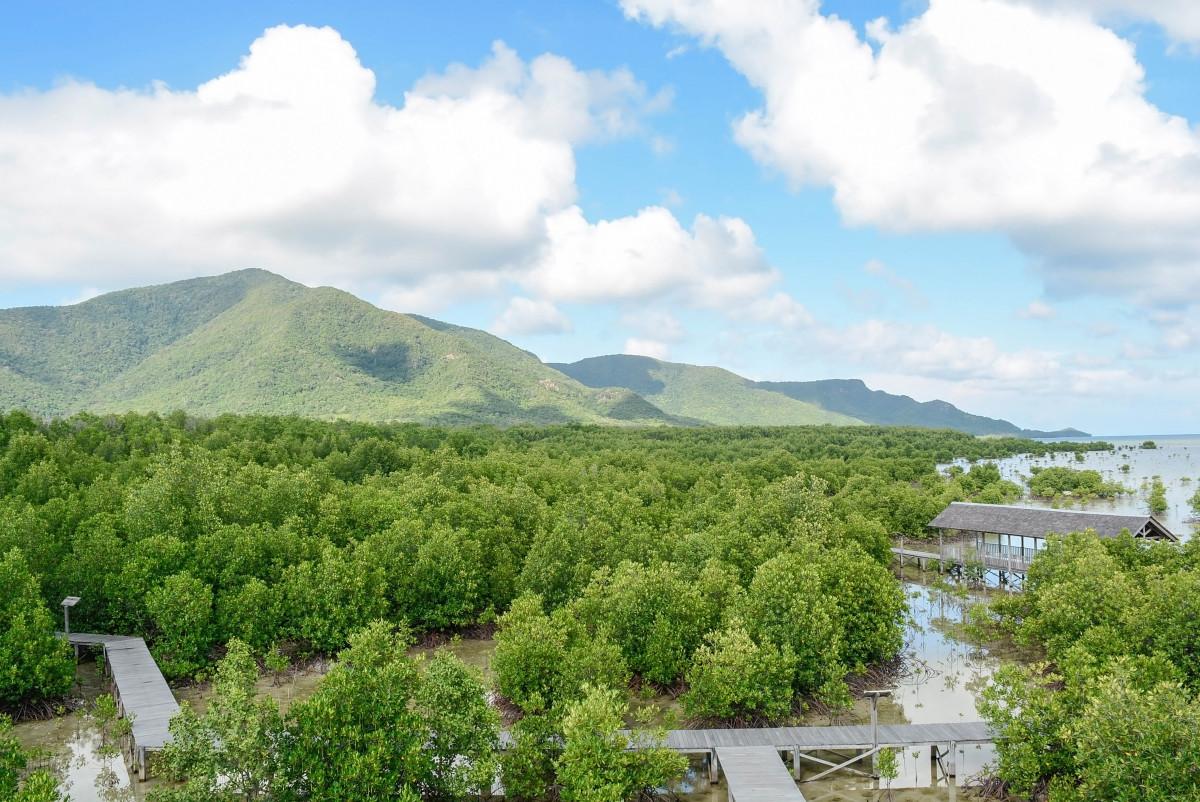 Ancaman Sampah Plastik di Hutan Mangrove Pesisir dan Upaya Mengatasinya