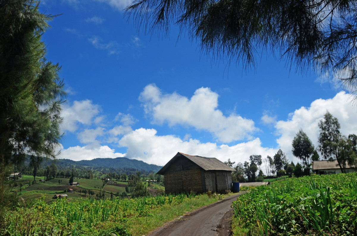 Ranu Pani, Desa Tertinggi di Pulau Jawa dan Keunikan Suku Tengger