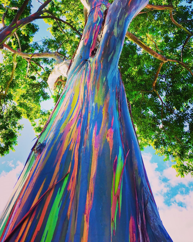Asal Tahu Saja, Pohon Pelangi Terindah di Dunia Ada di Indonesia