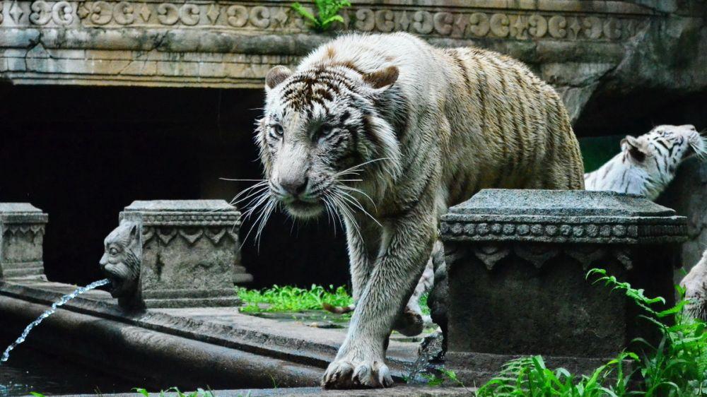 Taman Safari Terluas di Asia Tenggara Ada di Indonesia