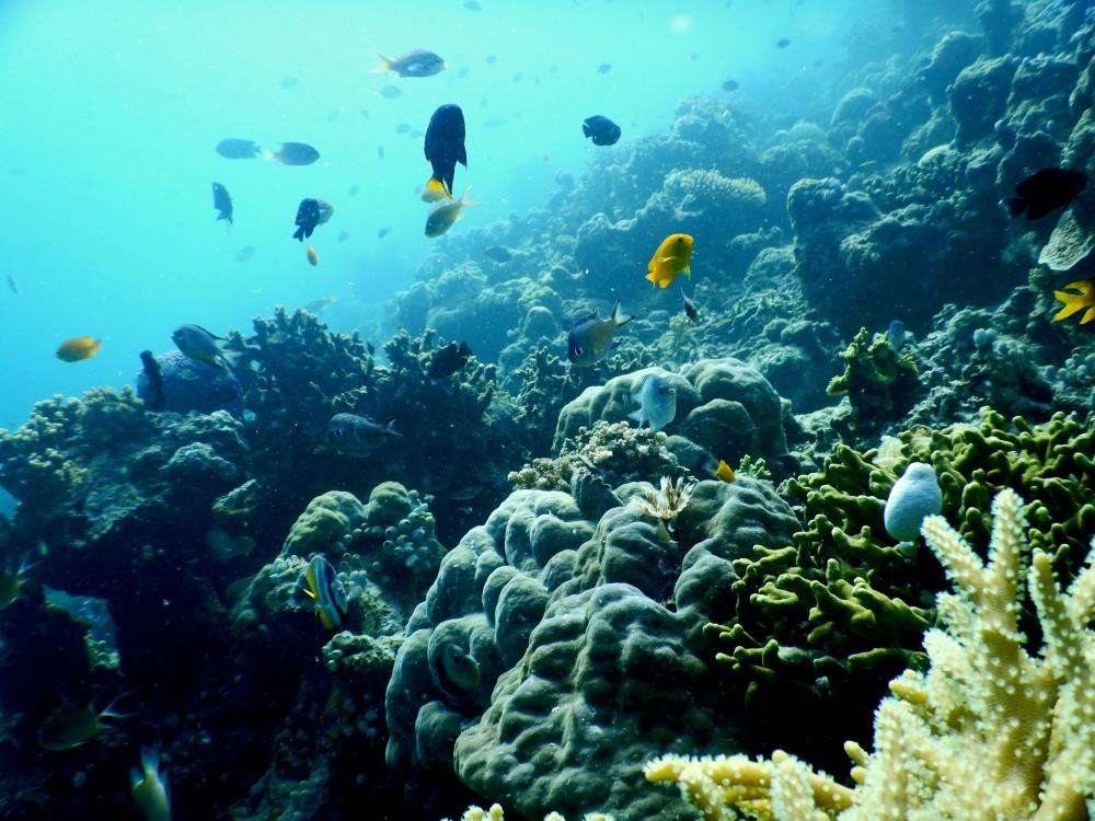 Saat Laut dijaga dengan Muro, Ikan-Ikan pun Datang Kembali ke Lamatokan