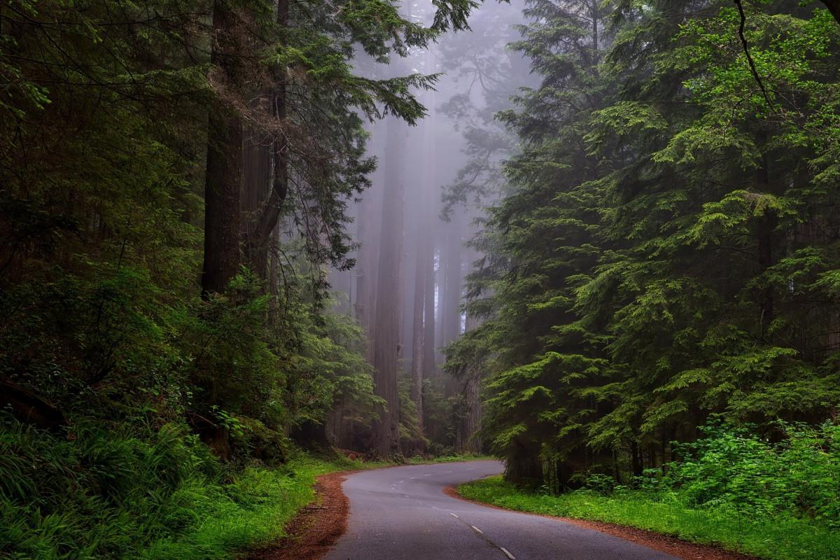 Misteri Hutan Dayeuhluhur Cilacap yang Terlarang bagi Para Pejabat