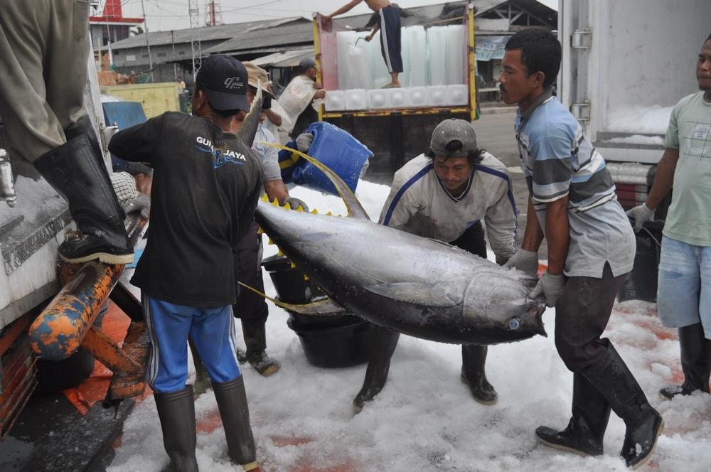 Ekspor Ikan Indonesia ke Negeri Matador Meningkat Pesat