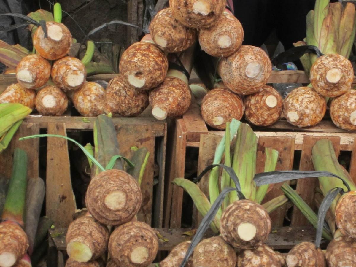 Talas, Oleh-Oleh Asal Bogor yang Kaya Nutrisi