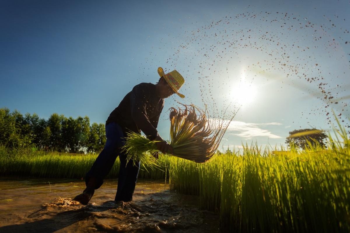 Refleksi Hari Tani Nasional, Degradasi Lahan dan Regenerasi Petani Indonesia