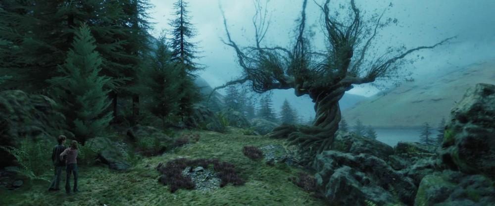 Si Akar Langit, Pohon Harry Potter dari Kota Soto