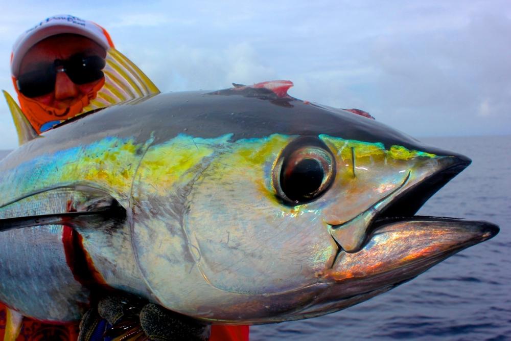 Ikan Seharga