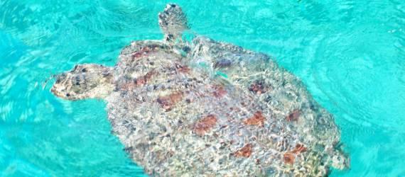 Aksi Pemuda Bajo Jaga Pesisir dan Satwa Laut Dilindungi