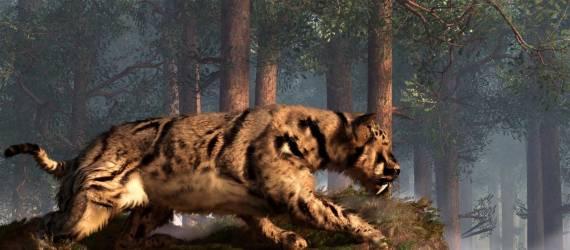 Apakah Benar Harimau Pernah Eksis di Kalimantan?