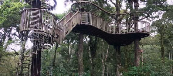 Tanaman 'Berbicara' di Kebun Raya Bedugul Bali