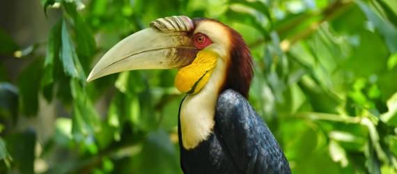 Negara Ini Memiliki Jumlah Burung Endemik Terbanyak di Dunia