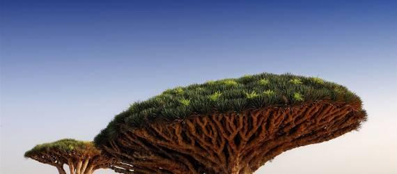 10 Tumbuhan Paling Unik di Dunia, Dua dari Indonesia