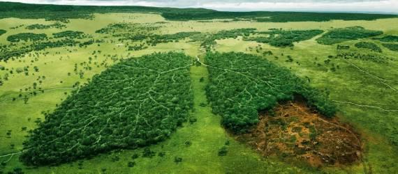 Bagaimana Hutan Indonesia Sebagai Paru-Paru Dunia di Masa Depan ?