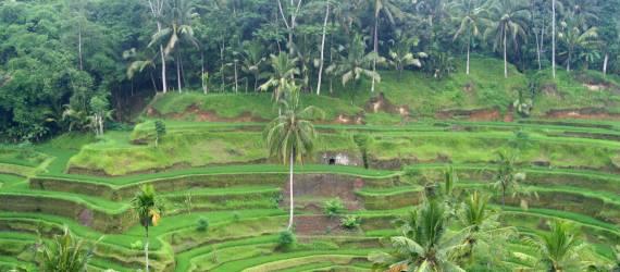5 Instagrammable Bukit di Bali