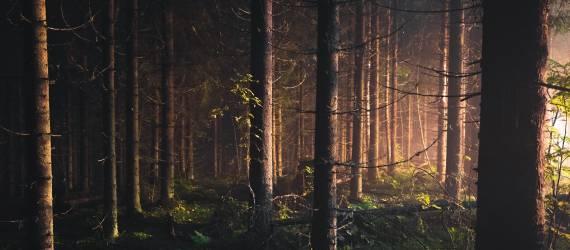 Papua Barat Bakal Menjadi Provinsi Yang Memiliki Peraturan Pengelolaan Hutan