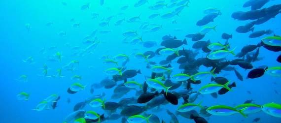 [Foto] Begini Keindahan Alam Pulau Weh