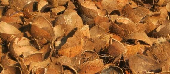 Ini Terumbu Karang Buatan Ramah Lingkungan & Murah dari Tempurung Kelapa