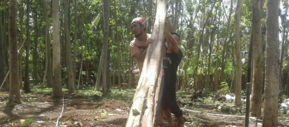 Wisatawan Asing Rayakan Natal di Lombok dengan Lakukan Tanam Pohon