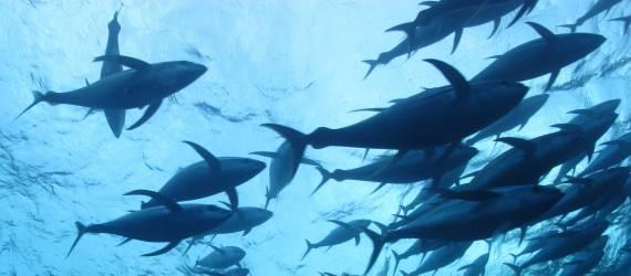 """Kembangkan Teknologi Penyimpanan Ikan, IPB Raih Juara """"Innovation Challenge"""""""