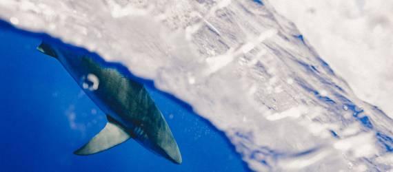 Menakjubkan! Ditemukan 12 Spesies Unik di Laut Jawa