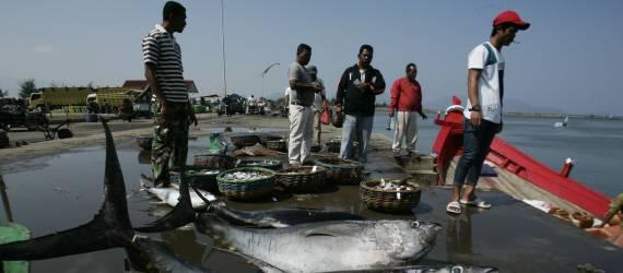 Ini Contoh Sukses Perikanan Berkelanjutan dari Nelayan Skala Kecil