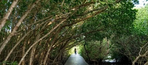 Kota Ini Bakal Miliki Kebun Raya Mangrove Pertama di Dunia?