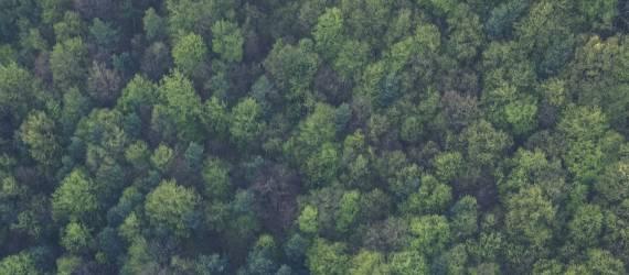Wow Akan ada Kebun Raya Baru di Kalimantan, Terbesar di Indonesia