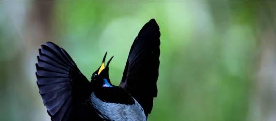 Penelitian: Indonesia Terbanyak Spesies Burung Dengan Keunikan Evolusi
