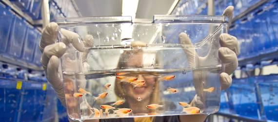 Indonesia Akan Bangun Dua Laboratorium Kesehatan Ikan Kelas Dunia